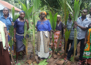 Kwale residents with  Coconut seedlings distributed by Base Titanium.
