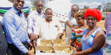 KCB Bank Kenya has launched a Ksh300 million (US$2.9 million) poultry farmer empowerment project in Makueni County, in its latest move to support agro-business in Kenya. This will see over 1,000 poultry farmers in Kibwezi benefit from credit facilities, capital, vaccinated insured chicks, chicken feed and vaccines. The project will be offered under KCB MobiGrow, a mobile-based platform which provides financial and non-financial services to smallholder farmers in Kenya and Rwanda. KCB Group has committed Ksh50 billion for the next five years to be extended to smallholder farmers. This will see more start-up enterprises in the sector access credit facilities at concessionary rates.