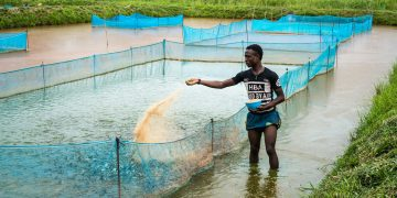 A fish farmer. Questions linger on whether digital agriculture can solve Africa's economic development issues and address food insecurity challenges. www.https://theexchange.africa