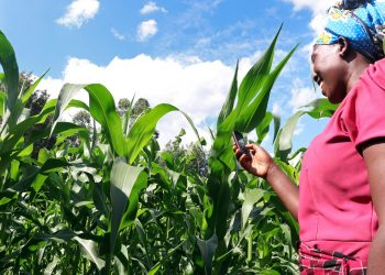 Smiling-African-woman-farmer-looking-at-phone